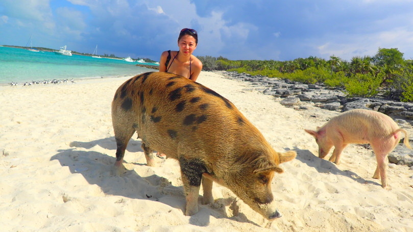 The Ultimate Guide to: The Swimming Pigs in Bahamas – Tracy