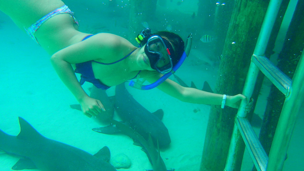 Compass Cay Snorkeling with Nurse Sharks