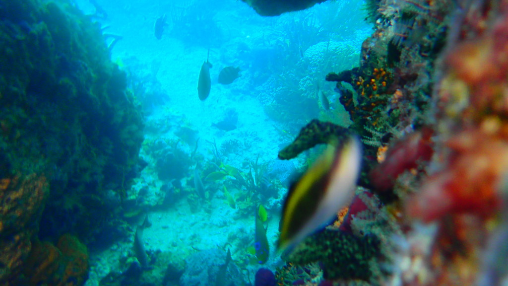 Amazing Marine Life and Coral